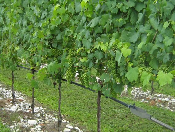 Acquafert progetti irrigazione vigneti