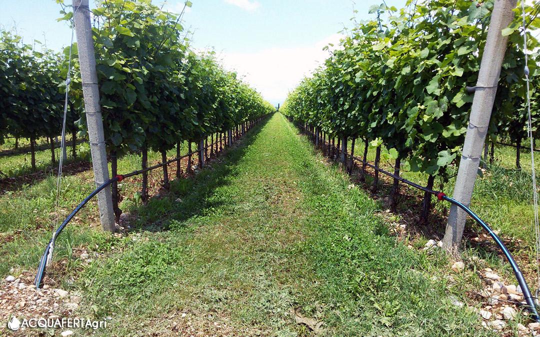 Con l 39 irrigazione a goccia uve migliori e notevole for Sistemi di irrigazione