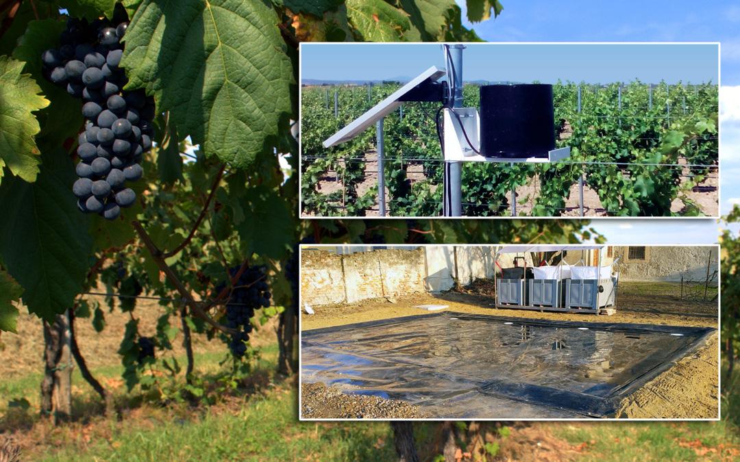 Speciale vigneti e viticoltura sostenibile